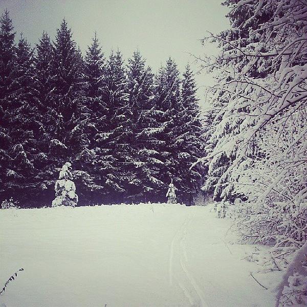 Kelios idėjos Vilniaus lygumų slidininkams